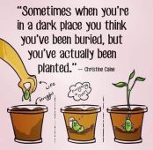 You've Been Planted